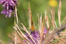 Una Bella Farfalla Si Nutre Di Un Fiore, Macro Di Farfalla Su Un Fiore Colorato In Estate