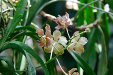 Orchids Grow Directly In The City Of Singapore. These Were Close To The Entrance To Jurong Park.