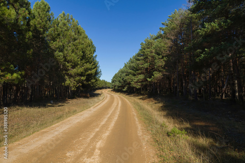 Fotografia, Obraz Road and dirt road in a pine forest