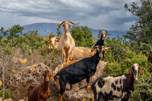 Foto Fascinating encounters with goat herds on the back roads of the Peloponnese Peni