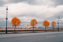 Yellow Autumn Trees On The Gra...