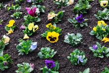 Seedlings Of Flowers In Flower...