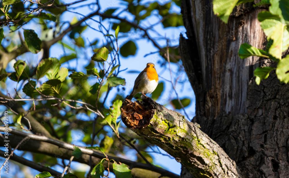 Fototapeta Dzikie ptaki w swoim naturalnym środowisku.
