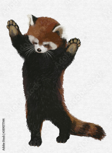 Papel de parede red Panda stands on its hind legs