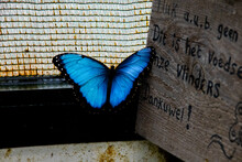 Butterfly On The Wall