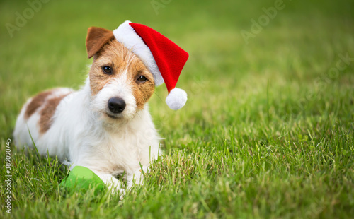 Obraz Christmas happy cute santa pet dog puppy smiling in the grass. Holiday card background with copy space. - fototapety do salonu