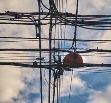 Ovenbird Nest On Communication...