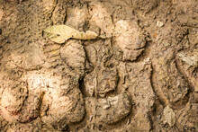 Footprint Of Shoe On Dry Mud