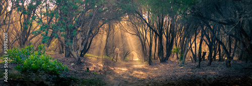 Fotografiet A lone figure walking down an Australian bush track evening light filtering thro