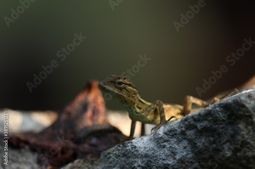 Obraz na plátně lizards