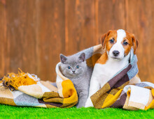 A Puppy And A Kitten Are Sitting Together Under A Checkered Blanket On The Grass Near The House In Autumn