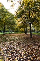 Automne, feuillent tombent  , jaune et rouge, parc en pleine air