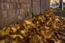 Lots Of Fallen Autumn Brown Leaves On The Sidewalk Beside The Brick Wall. Focus On Background. Beautiful Fallen Maple Leaves. Copy Space. Ballinteer, Dublin, Ireland