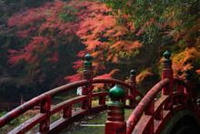 紅葉が美しい秋の日本...
