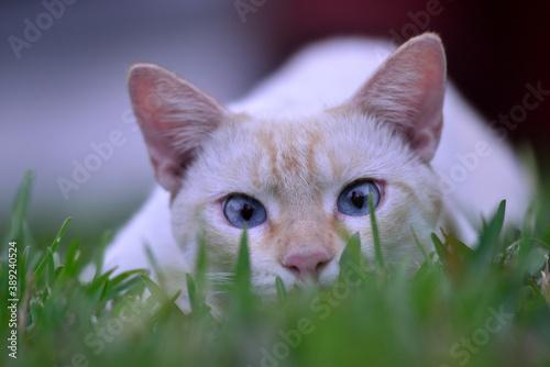 Fényképezés gato