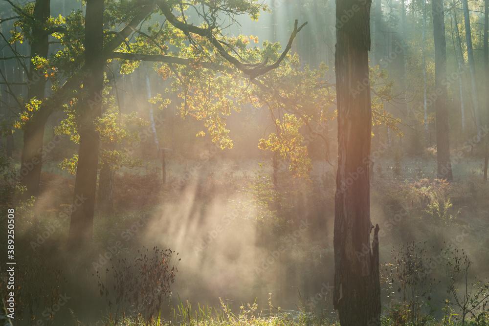 Fototapeta Poranna mgła unosząca się nad rzeką płynącą przez las.