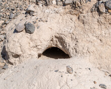 The Burrow Of The Threatened Desert Tortoise (Gopherus Agassizii) Matches The Shape Of Its Shell.