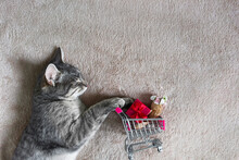A Cat Sleeps On A Beige Light Blanket And Rolls A Supermarket Trolley With A Red Gift And A Bow, And A Bouquet Of Roses