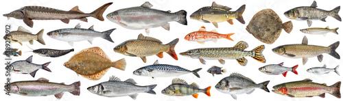 Fish set isolated Fototapet