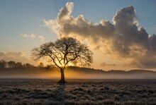 Sunset In The Fog