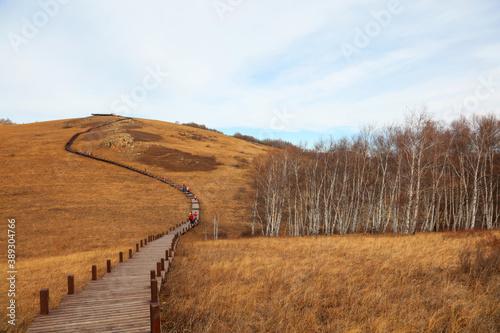 Fototapeta Wooden trestle in huanggangliang Park, Keshiketeng World Geopark, Inner Mongolia