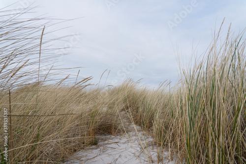 Dünen am Nordstrand im Ostseebad Prerow auf dem Darß, Fischland-Darß-Zingst, Mecklenburg Vorpommern, Deutschland