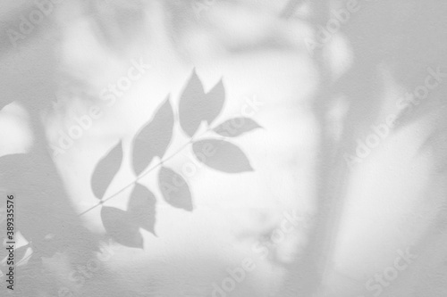 Obraz Leaf shadow and light on wall background. Nature tropical leaves tree branch and plant shade with sunlight from sunshine dappled on white wall texture for background wallpaper and design - fototapety do salonu