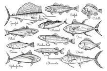 Fish Sketch Style Illustration. Hand Drawn Vector Illustration. Seafood.