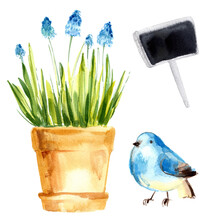 Herbs In Pots Painted With Watercolors On White Background. Slate Tablet, Blue Bird. Spring. Easter Decor.