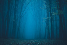 Forest In Fog With Mist. Fairy...