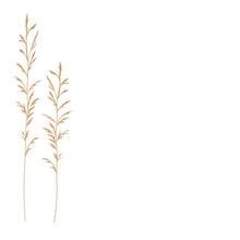 Pampas Grass Vector Stock Illu...