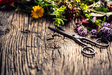 Variety Of Healing Herbs And F...