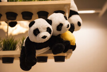 Panda Dolls On Shelf For New Born Baby In House