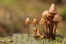 Pilzwelt - Die Welt Der Pilze