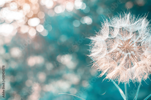 a large white dandelion on a blurry background with bokeh Fototapet