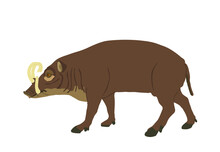 Babirusa Vector Illustration Isolated On White Background. Deer Pig Animal. Babyrussa Pig Deer.