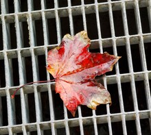 Autumn Red Leaf With A Grate Background Of A Manhole