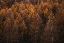 Orange Forest In Autumn