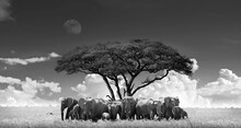 African Elephants By The Tree,...