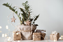 Houseplant Christmas Tree. Gif...