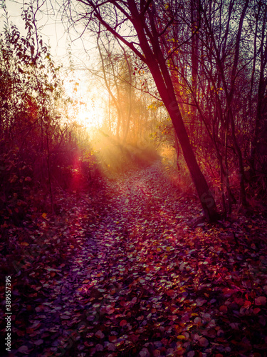 Obraz First rays of sunshine on a forest aisle in autumn - fototapety do salonu