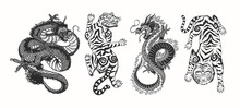 Japanese Dragon. Asian Japanese Tiger. Mythological Animal Or Traditional Reptile. Symbol For Tattoo Or Label. Engraved Hand Drawn Line Art Vintage Old Monochrome Sketch, Ink. Vector Illustration.