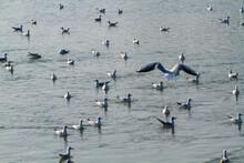 Seagull Po Delta Regional Park...