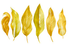 Abstract Autumn Leaves. Waterc...