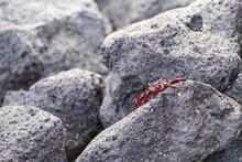 Closeup Shot Of A Red Rock Cra...