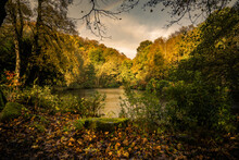 Fishpond Wood In Autumn