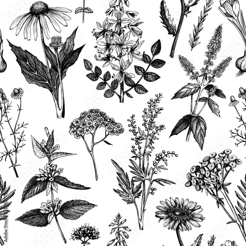 Photographie Botanical background with hand drawn spices and herbs