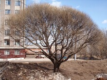 Urban Landscape With A Tree In...