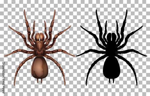 Photo Spider on transparent background