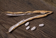 Dried Pole Bean Pods Open With Seeds Coming Out On A Rustic Wooden Background